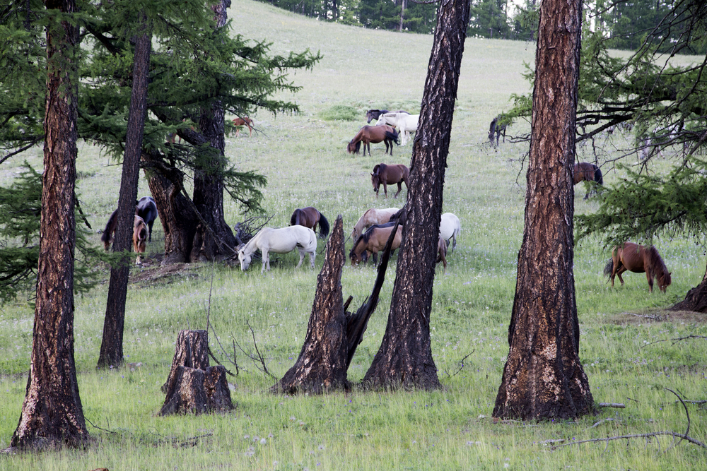 horse forest